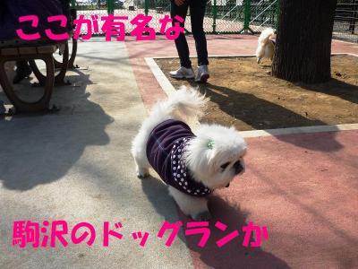 taro100347_convert_20100330203047.jpg