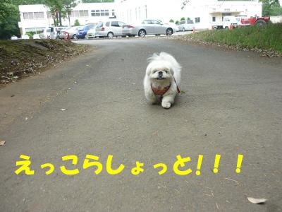 taro100546_convert_20100526213101.jpg