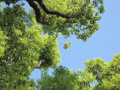 本当に綺麗な新緑と青い空♪