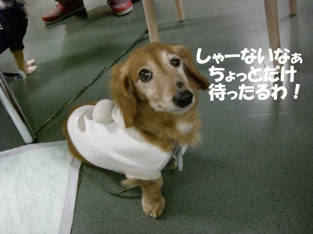 CIMG8184_20110117150246.jpg