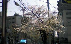 noshinomiya_20100420110555.jpg