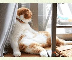 おしゃべり猫7