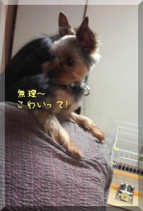 20100716②