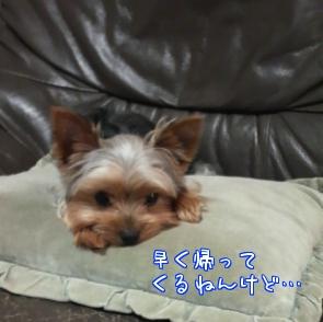 20101016②
