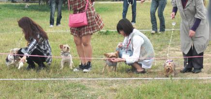 20101024ヨーキー①