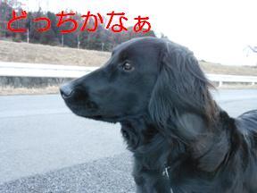 気になる1【れんと】20120209