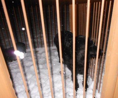 夜の雪遊び