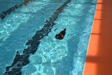 【つんと】泳ぐ1