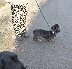シンクロする犬3