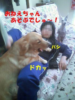 a_20110131061219.jpg