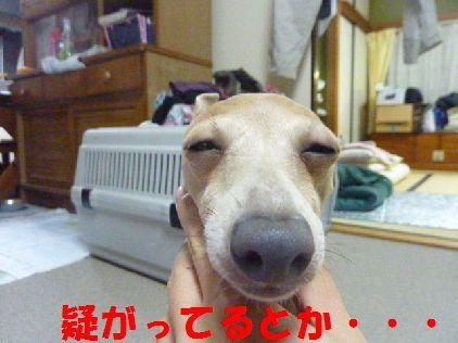 f_20101231080447.jpg