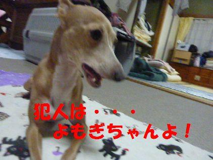g_20101231080447.jpg