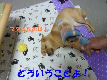 h_20101231080516.jpg