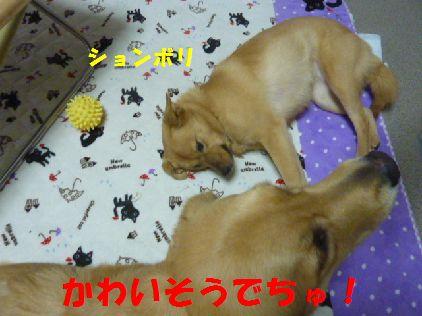 i_20101231080515.jpg