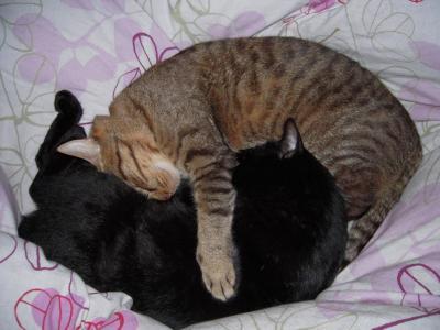 タロクロ猫団子