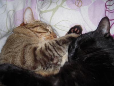 恋人同士みたいな寝かた