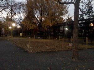 11月30日の中庭