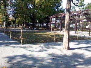 11月7日の中庭
