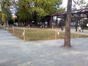 11月8日の中庭