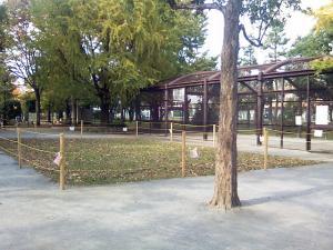 11月9日の中庭