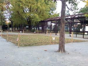11月10日の中庭