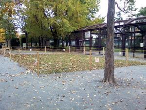 11月12日の中庭