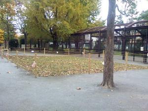 11月13日の中庭