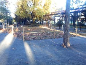 11月20日の中庭