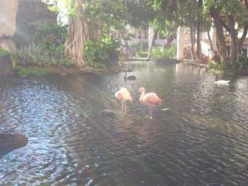ウェスティン池