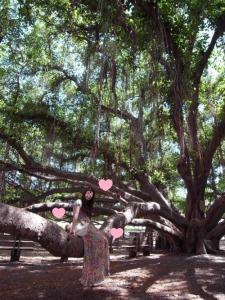 バニアンツリー2