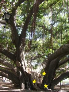 バニアンツリー3