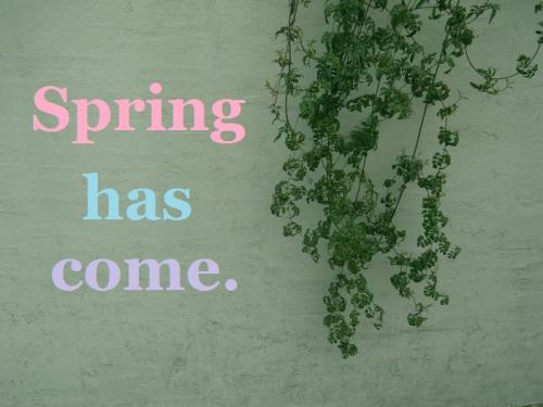 春来たー!