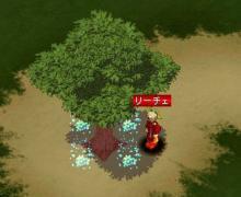 Star drops☆ミ-木の下から光が…