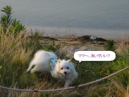 image2746970.jpg