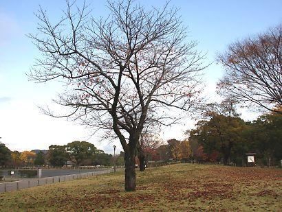 駿府公園の紅葉-1