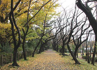 駿府公園の紅葉-3