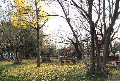 駿府公園の紅葉-4