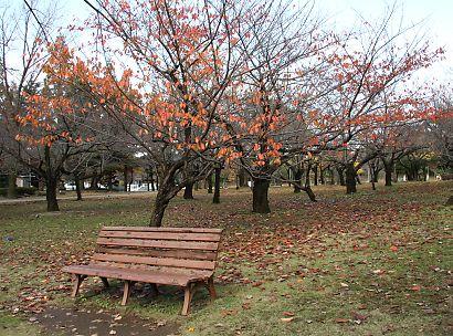 駿府公園の紅葉-7