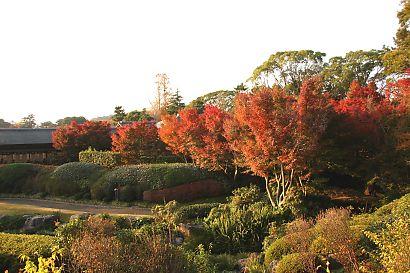 紅葉山公園-4