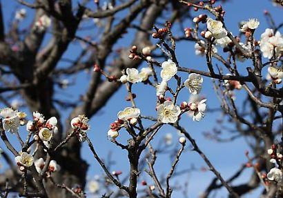 紅葉山庭園花ー3
