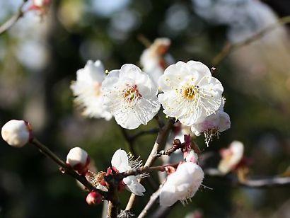 紅葉山庭園花ー4