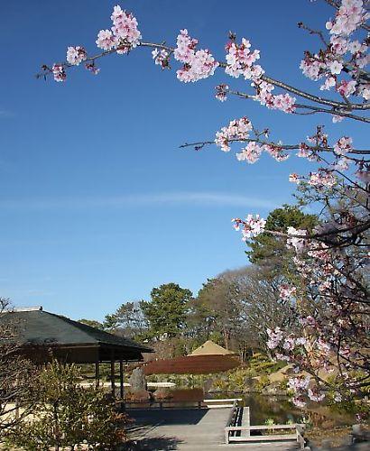 紅葉山庭園花ー5