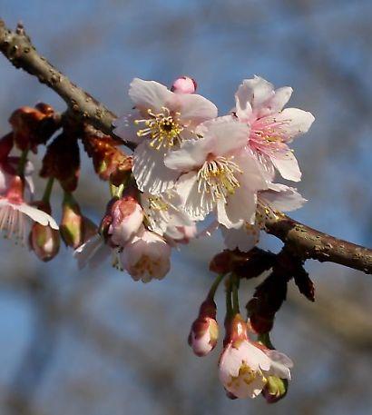 紅葉山庭園花ー7