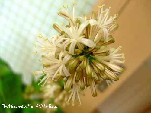 DSCF5・7幸福の木花