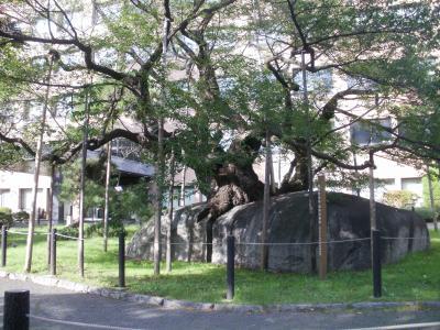 iwate+035_convert_20111002075825.jpg