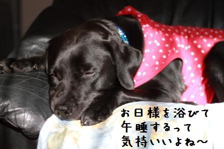 001-20101027-009.jpg