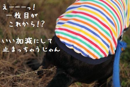 001-20101106-001.jpg