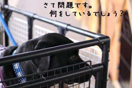 001-20101108-001.jpg