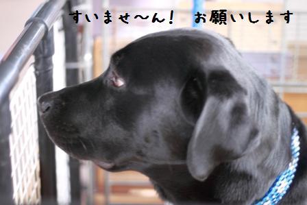 003-20101108-004.jpg