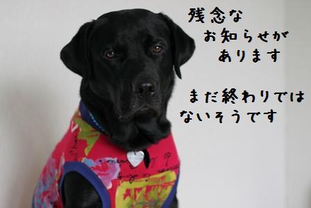 003-20101112-001.jpg